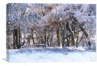 Peak District woodland in winter, Canvas Print