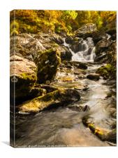 Early Autumn in a Lake District beck, Canvas Print