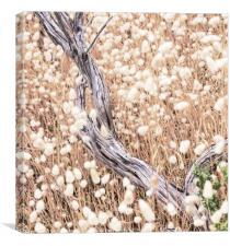 Summer grasses, Canvas Print