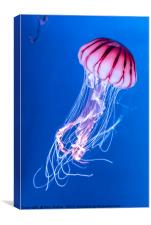 Pink Jellyfish in deep blue water, Canvas Print