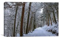 Winter Woodland, Canvas Print