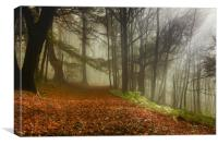 Woodland Mist, Canvas Print