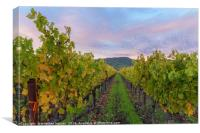 Vineyard In The Fall, Canvas Print