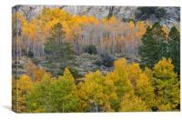 Fall Foliage , Canvas Print