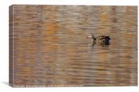Duck in Grant Lake, Canvas Print