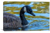 Canadian Goose, Canvas Print