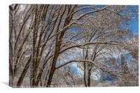 The Winter Canvas, Canvas Print