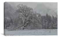 Yosemite Winter , Canvas Print