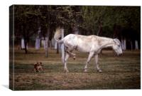 Horse and dog in a fight, Canvas Print