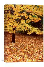 Fallen leaves on side hill, Canvas Print