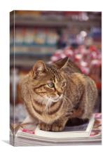 Tabby cat looking left, Canvas Print