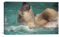 Polar bear, Backstroke, Metro Toronto Zoo, Canvas Print