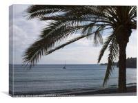 Palm Tree Silhouette, Canvas Print