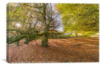 Woodland in Autumn, Canvas Print