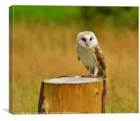 Muncaster Owl, Canvas Print