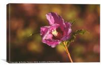 Hibiscus Flower, Canvas Print