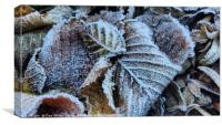 Early morning frost, Canvas Print