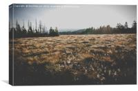 Marsh Landscape in Germany in the Morning at Fall., Canvas Print