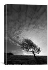 Windswept Blackthorn Tree In Winter Black & White, Canvas Print
