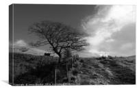 Winter Oak Tree in Black and White Wales
