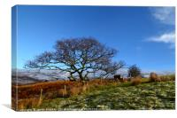 Lone Oak Tree And Welsh Countryside