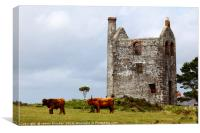 Highland Cattle and Tin Mine Bodmin Moor Cornwall