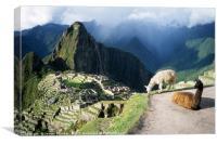 Llamas at Inca City of Machu Picchu Peru, Canvas Print