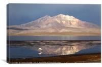 Chilean Flamingo and Lake Chungara Chile, Canvas Print