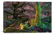 Enchanted Forest I, Canvas Print