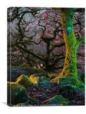 Enchanted Forest II, Canvas Print