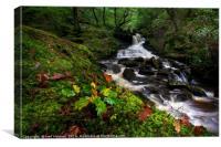 Autumn at Melincourt Brook, Canvas Print