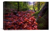 Autumn Colours at Pontneddfechan, Canvas Print