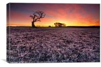 Frosty Morning Sunrise, Tythegston, Canvas Print