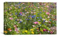 Summer Meadow Flowers, Canvas Print