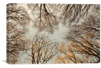 Bare Tree Canopy, Canvas Print