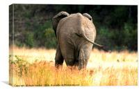 The baby Elephant , Canvas Print