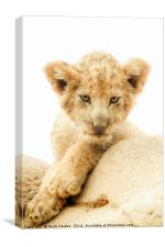 The baby Lion, Canvas Print
