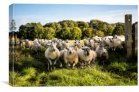 a flock of sheep standing at a gateway, Canvas Print