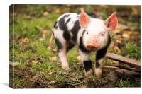 and this little piggy ..., Canvas Print