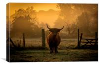 highland cow at sunrise, Canvas Print