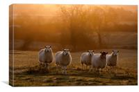 here's looking at ewe ..., Canvas Print