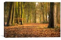 a late autumnal wood, Canvas Print