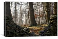 Charnwood Forest, Canvas Print