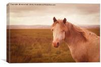 Vintage wild horse, Canvas Print
