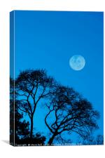 Forest moon, Canvas Print
