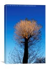 Autumn tree , Canvas Print