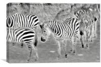 zebra in the jungle, Canvas Print