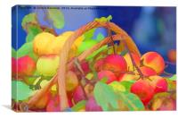 apple in the basket, Canvas Print