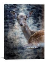 deer in the farm , Canvas Print