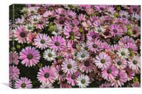 daisies in the garden, Canvas Print